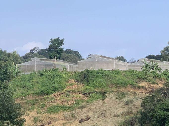 Bà Rịa - Vũng Tàu: Nhiều hộ dân khó khăn trong sản xuất vì bị cấp sai nhiều giấy chứng nhận quyền sử dụng đất