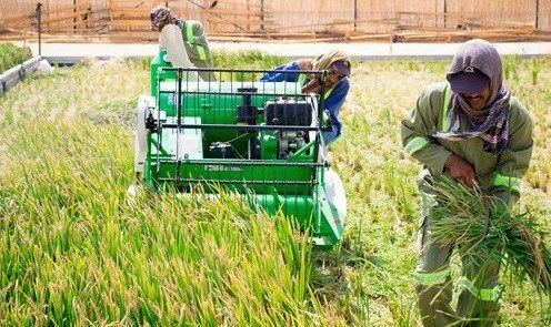 Trung Quốc tổ chức hội nghị quốc tế về chống lãng phí lương thực