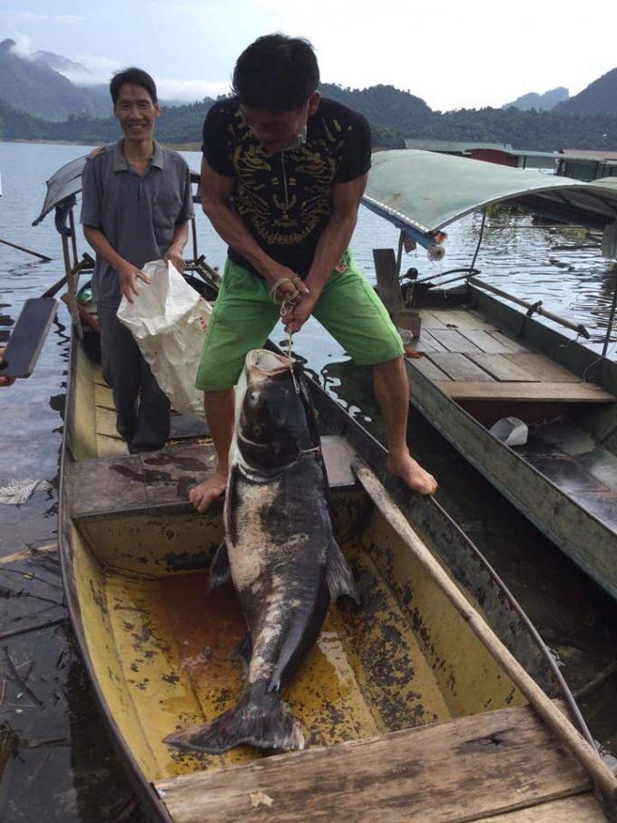 Tuyên Quang: Ngư dân Na Hang bắt được cá mè nặng gần nửa tạ