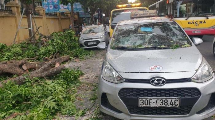Hà Nội: Cây xà cừ đổ đè bẹp 3 ô tô trên đường Trần Hưng Đạo