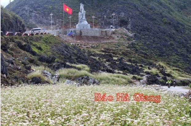 Mùa hoa của đá ở Hà Giang